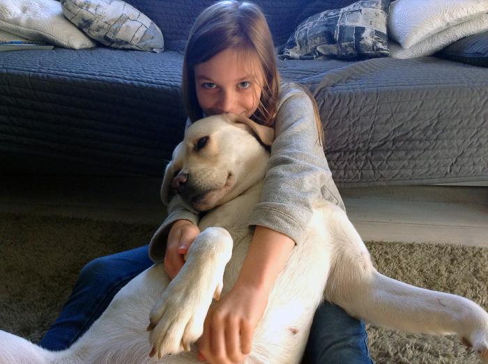 beza labradorka do adopcji