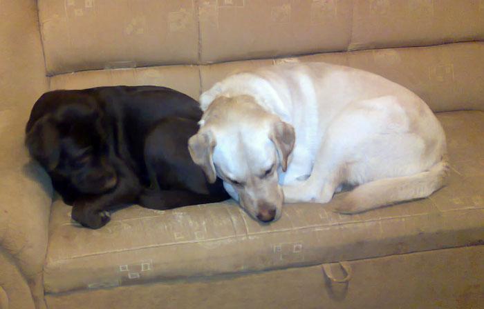 Madera i Czedar śpią