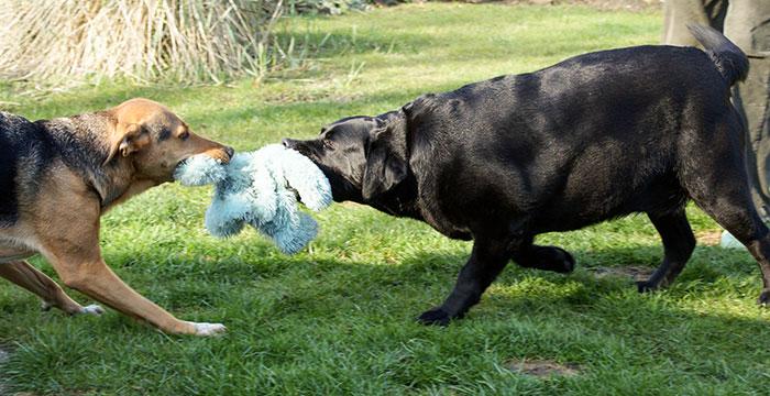 Kama lubi zabawę z innymi psami