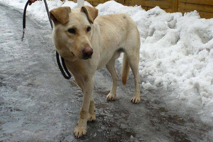 Papkin - niewidomy pies
