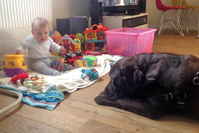 Jesse labradorka z rodowodem