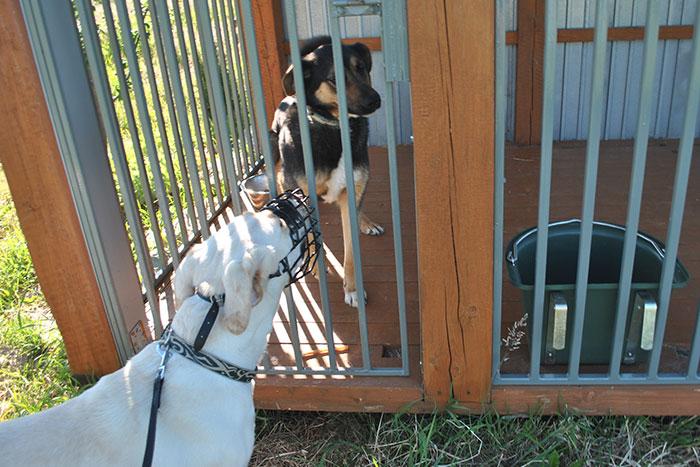 Lara nie lubi innych psów