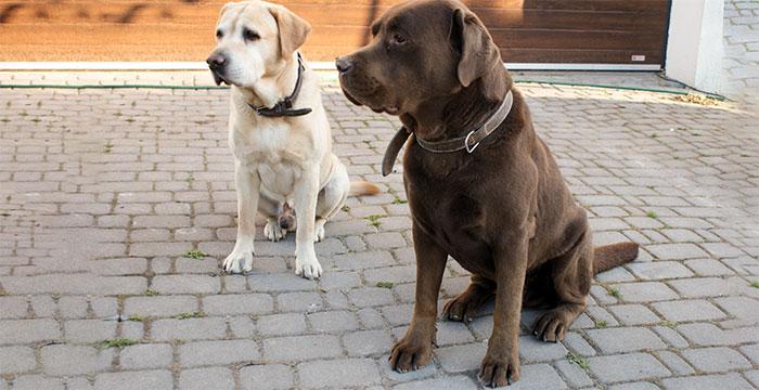Nero i Chocco czekają na dom
