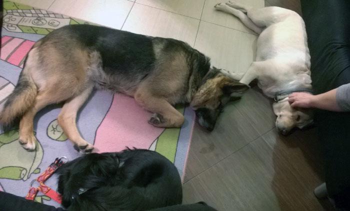 Sonia z psimi przyjaciółmi
