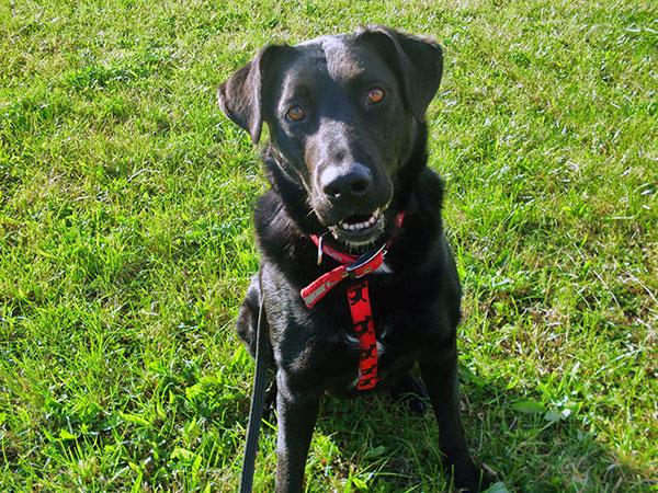 Bójka - radosny pies