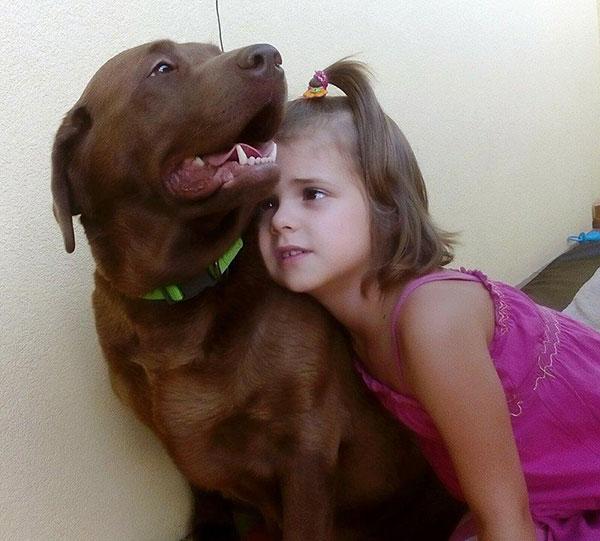 Labradorka i dziecko