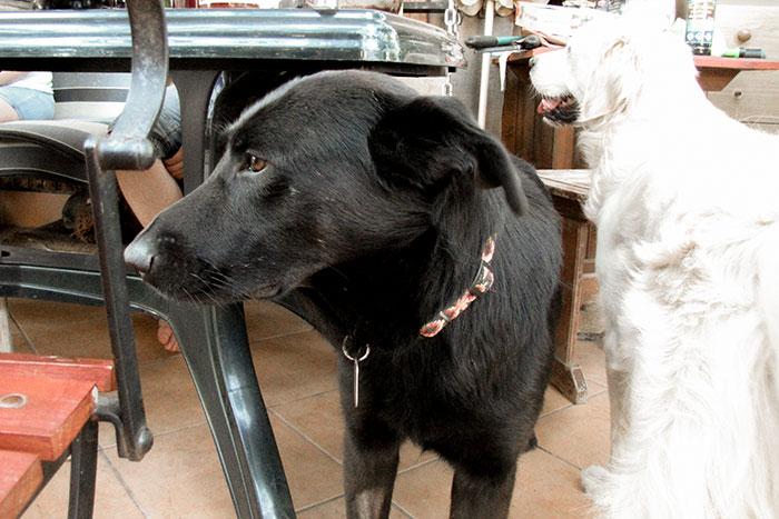 Nelson fajny pies