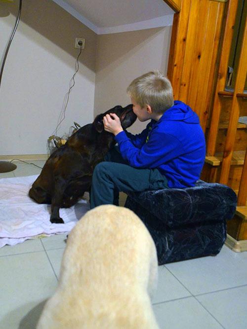 Labradorka z pseudohodowli
