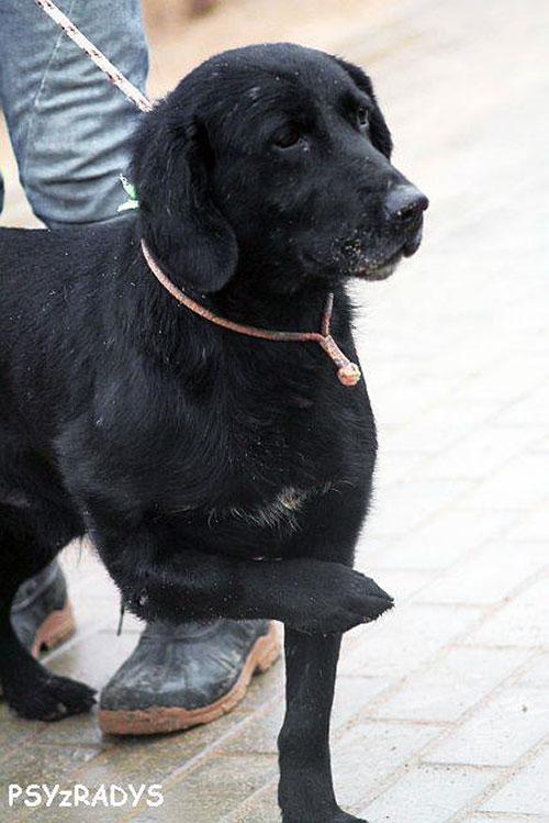 Labrador Sinus
