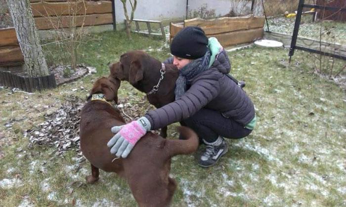 Labrador Bazyl