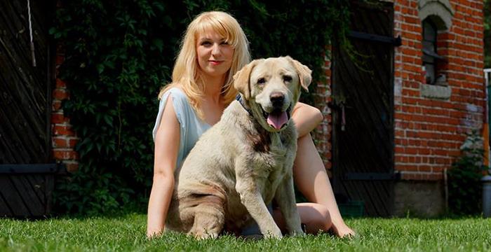 Labrador Fionek