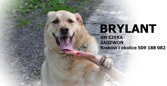 brylant6