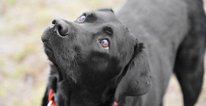 Labrador Sonar