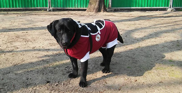 Jaga - labradorka w potrzebie