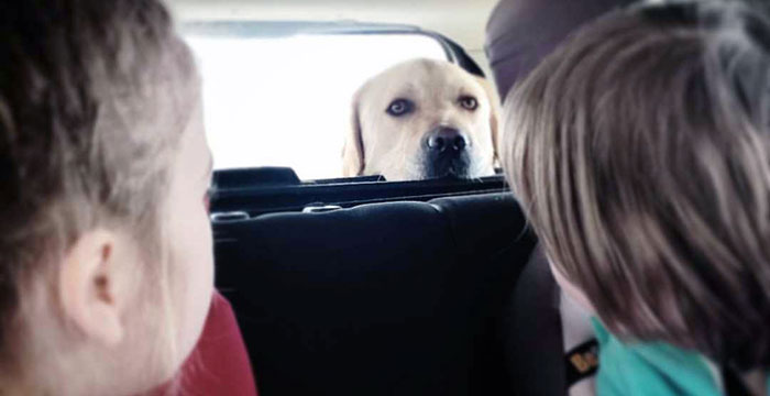 Labrador Sony
