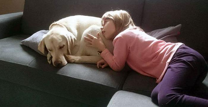 Lea, labradorka do adopcji