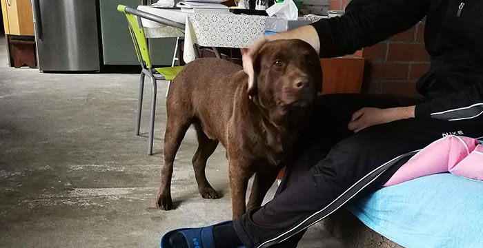 Max, labrador w potrzebie