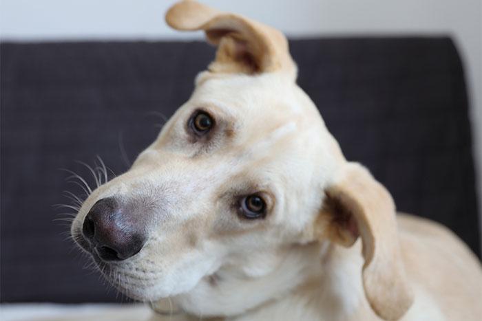Milo do adopcji