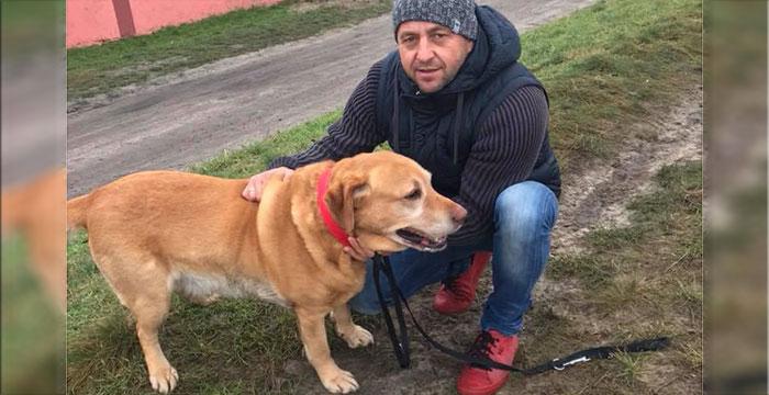 Labrador do adocpji