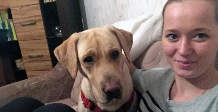 Holly, labradorka do adopcji