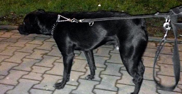 Pies w ptrzebie