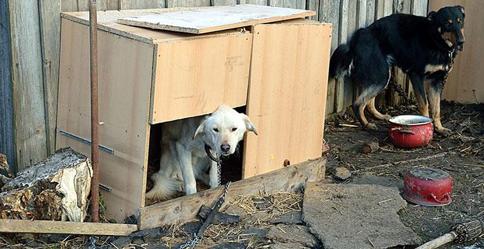 Reks, pies w potrzebie