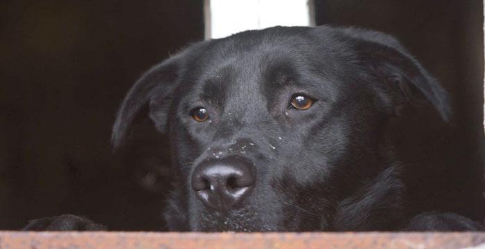 Roki, pies w potrzebie