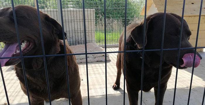 Znaleziono dwa labradory
