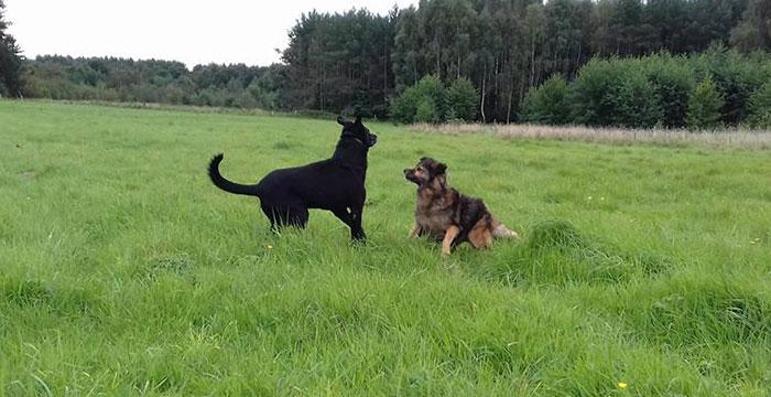 Niewidomy pies do adopcji