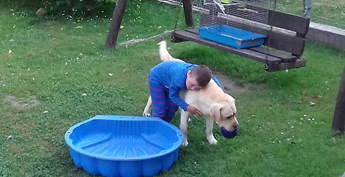 Niewidomy labrador Atos