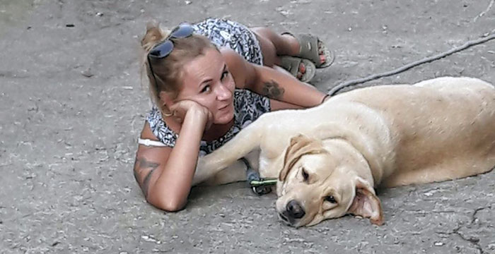 Labrador Milo