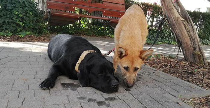 Znalezione psy