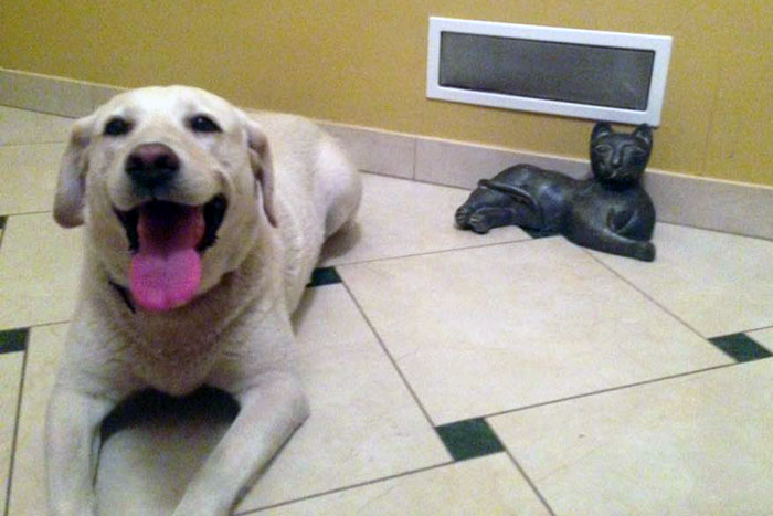 Zaginiona labradorka Bibi
