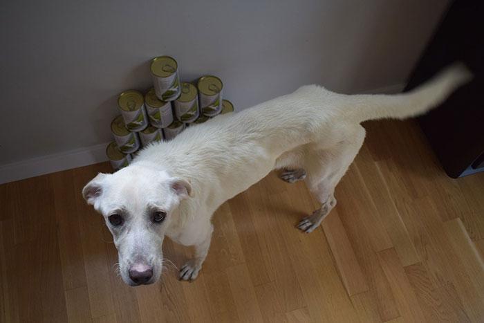 Labradorka SIla