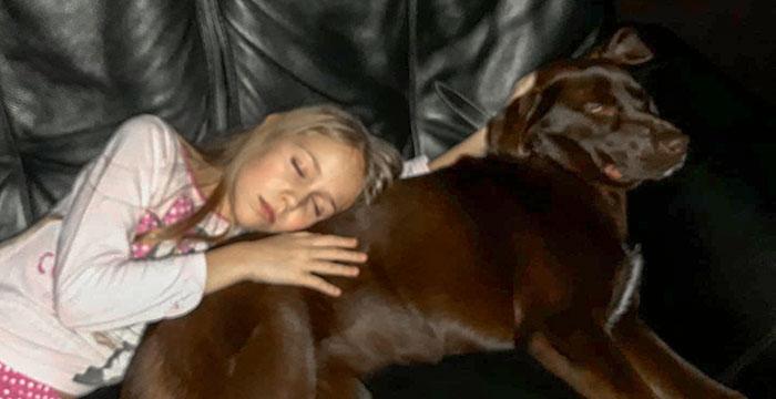 Labradorka Xena do adopcji