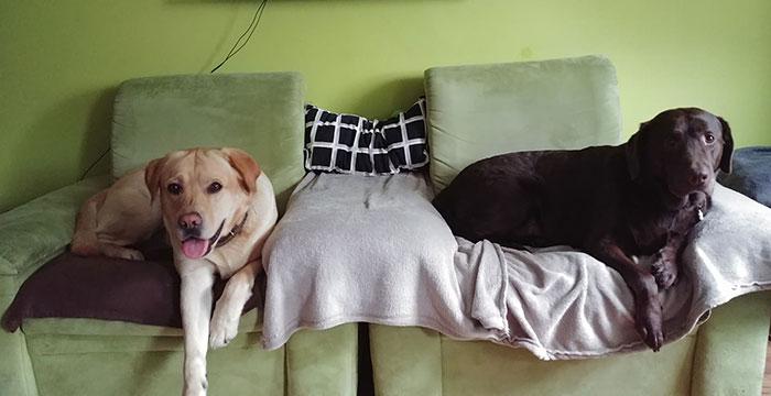 Labradory: Ares i Bruno