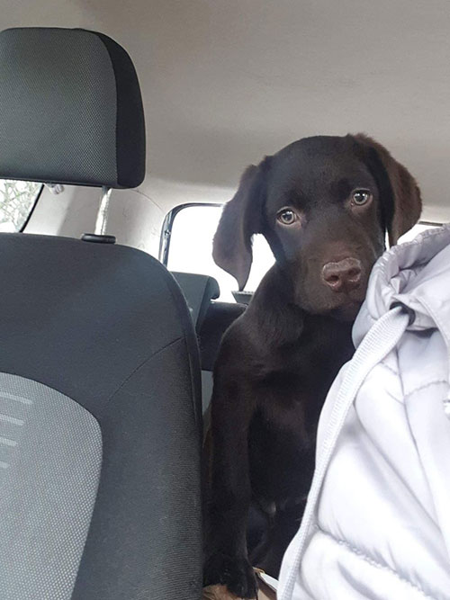 Labrador Fado