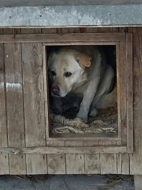 Pies w potrzebie