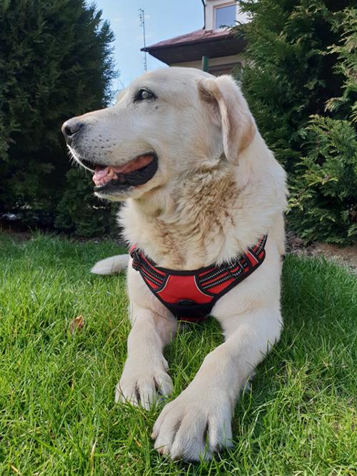 Labrador Ray
