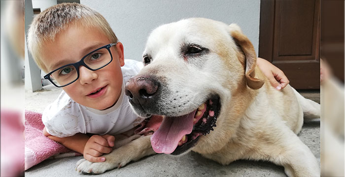 Borys, labrador do adopcji