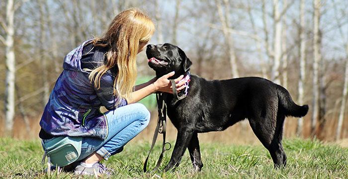 Lori, labradorka do adopcji