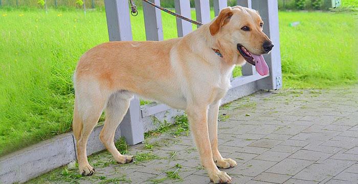 Satyr, pies do adopcji